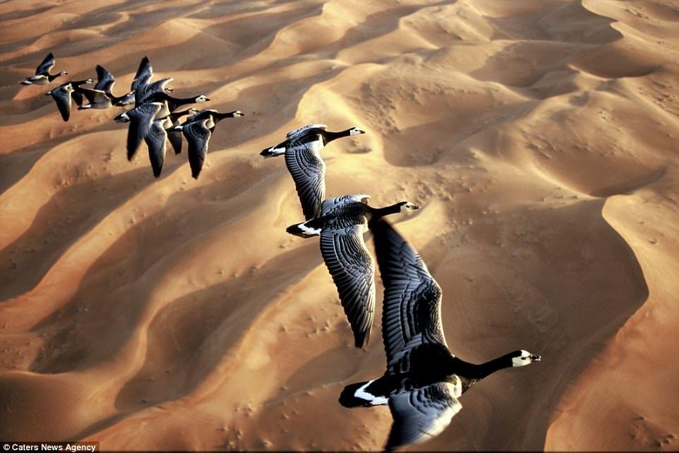 Azonosítsa a madarakat repülés közben